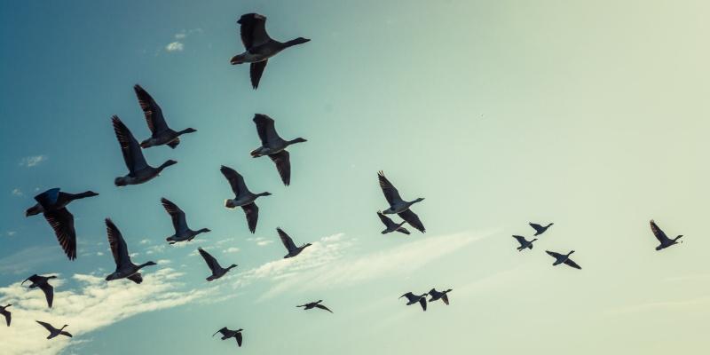 6 Common Application Migration Strategies