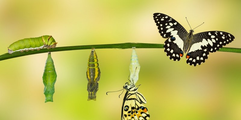 Transformational IT Leaders Embrace a DevOps Culture